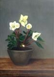 Hellebores by Linda Brill, Painting, Oil on Board