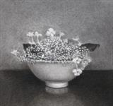 Hydrangea by Linda Brill, Drawing, Charcoal on Paper