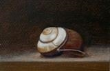 Shell 2 by Linda Brill, Painting, Oil on Paper